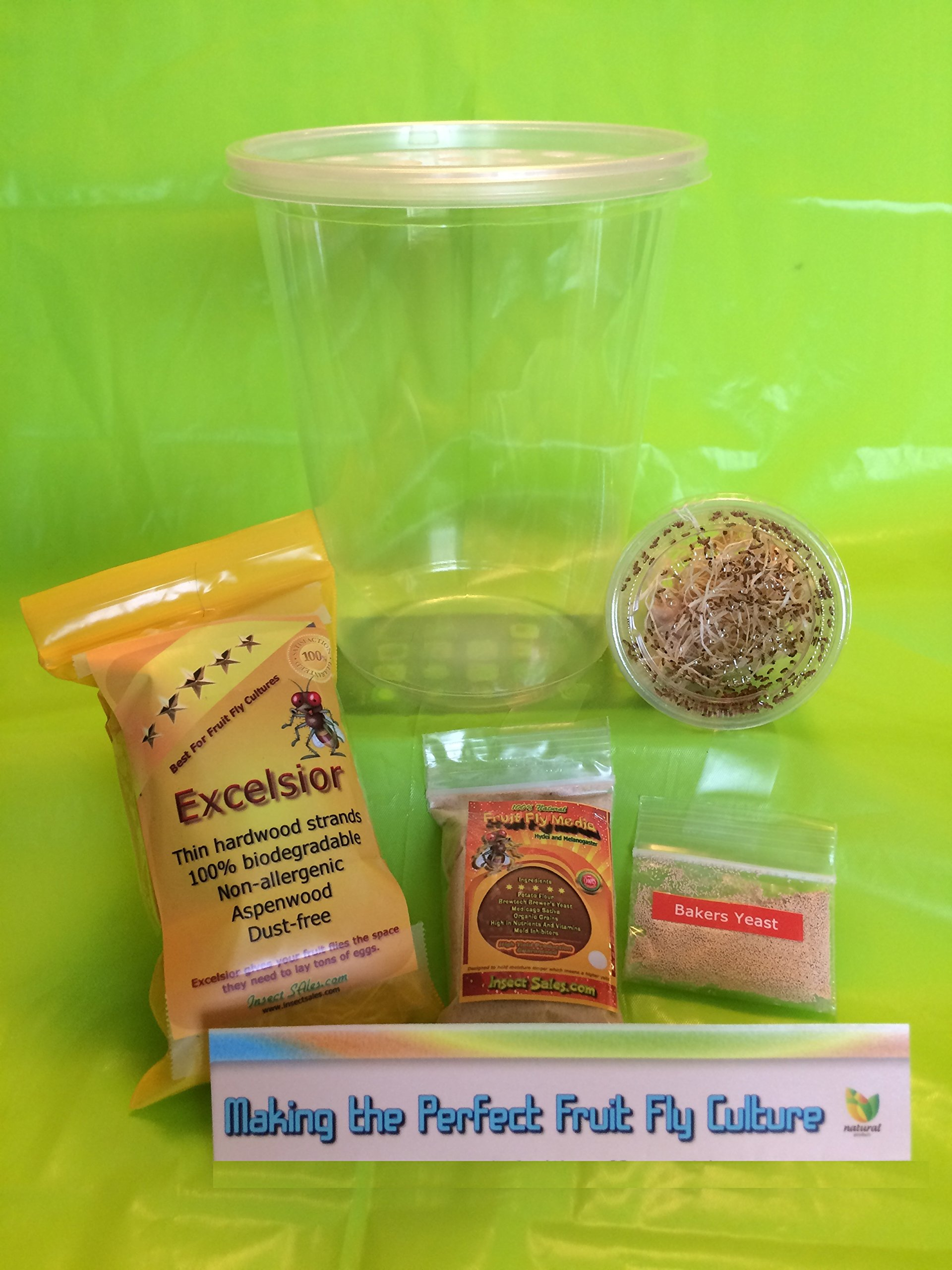 Insectsales.com LIVE Chinese Praying Mantis Egg (OOTHECA) + Kit & Flies (Fresh 2018)