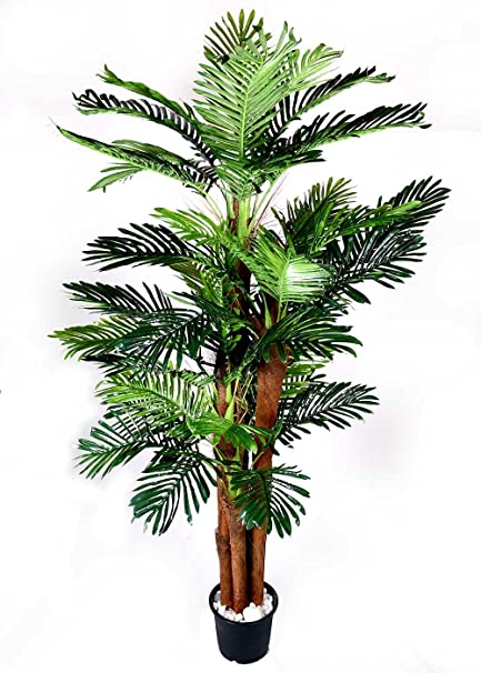 Buy Ginni Bloom Large Artificial Areca Palm Plant - 6 ft, Set of 4 on plant pot, plant bowl, plant on a table, plant painting, plant beaker, plant gift, plant suckers, plant bookends, plant flowers, plant plant, plant garden, plant cutting, plant closure, plant house, plant box, plant pottery, plant in hand, plant holders, plant sculpture, plant cat,