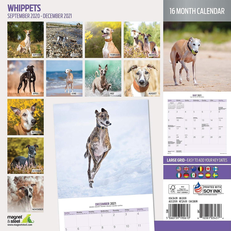Whippets 2021 Traditioneller Kalender