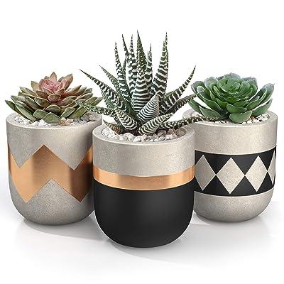 3 inch Small Succulent Pots with Drainage - Set of 3 Concrete Planter Pots for Succulent Plants - Cement Planter Cactus Pots - Use as Succulent Planter, Cactus Pot, Mini Succulent Pots, Cactus Planter: Garden & Outdoor