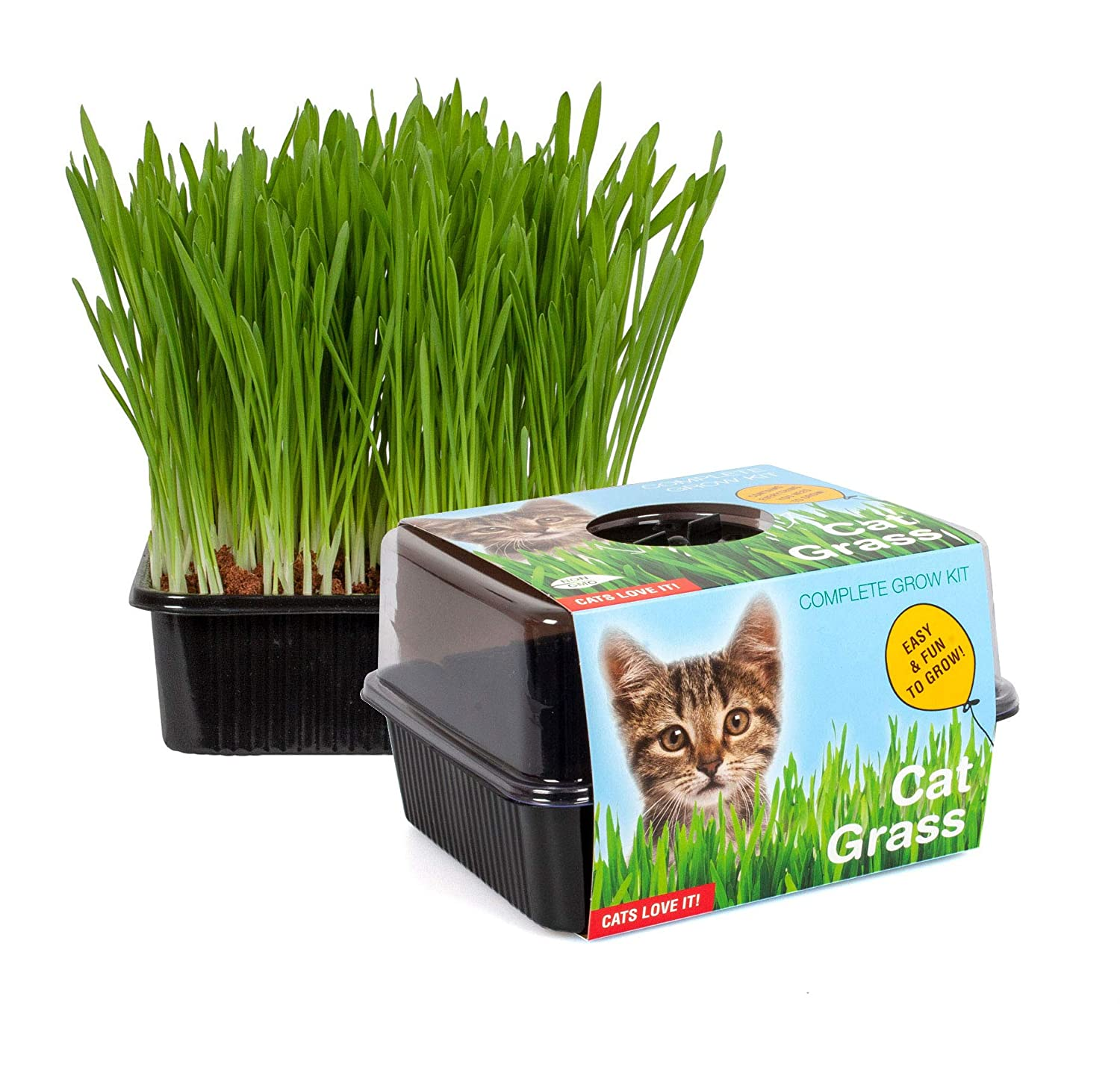 TotalGreen Holland Amazing Cat Grass Grow Kit | Grow Your Own Pet Grass from Seed Indoor in Just 5 Days | Cat Treat | Unique Indoor Greenhouse | Grow Healthy Cat Treats & Toys | Pet Snack