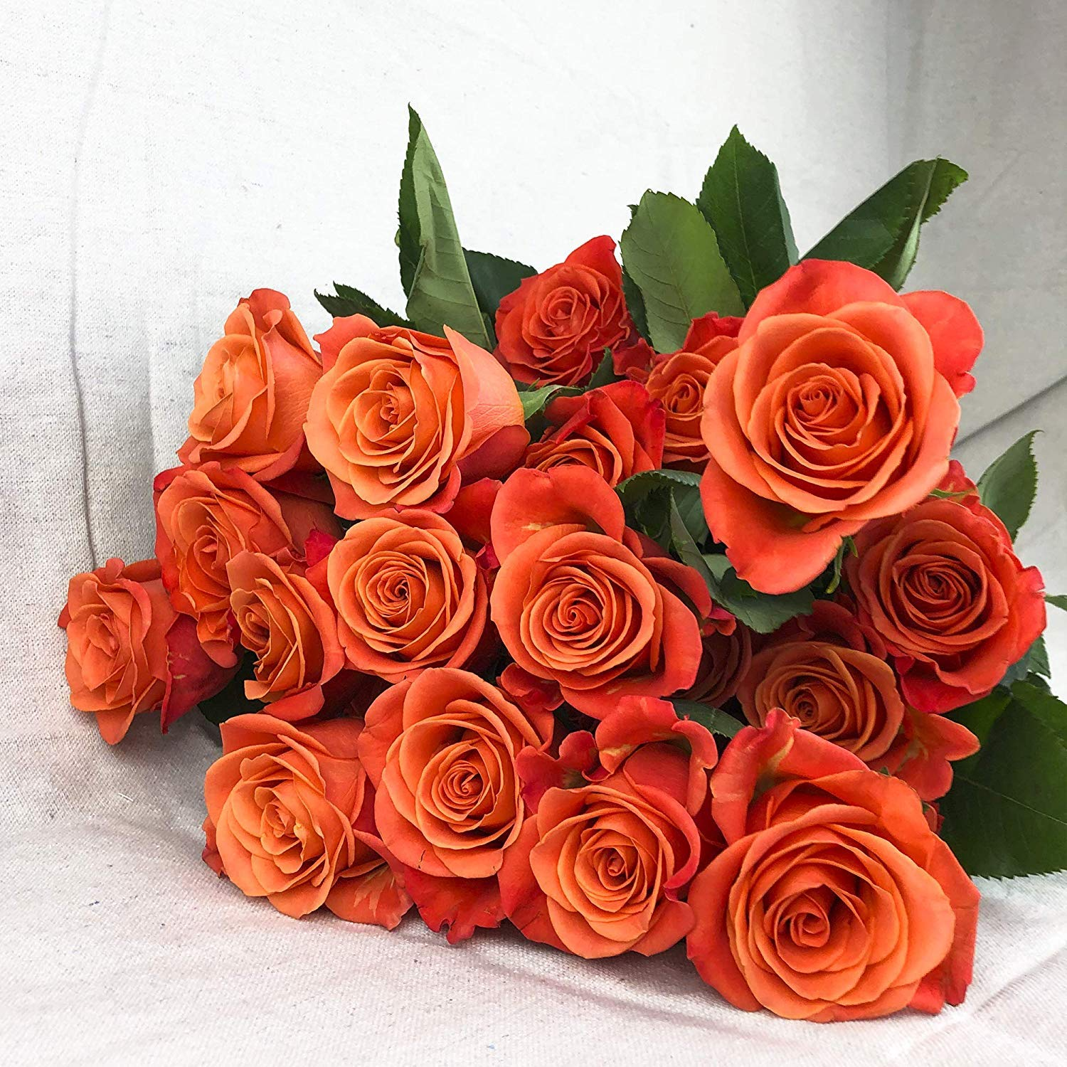 Green Choice Flowers - 24 (2 Dozen) Premium Orange Fresh Roses with 20 inch Long Stem Farm Fresh Flowers Beautiful Orange Rose Flower Cut Per Order Direct from Farm Free Fast Delivery Long Lasting by Greenchoiceflowers (Image #4)