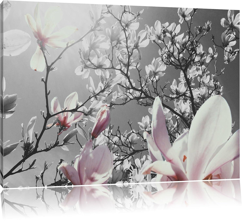 Amazon.de: schöne Magnolie Blüten schwarz/weiß Format: 100x70 auf ...