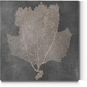 Floral Wall Art, Wall Décor Canvas, Classic, Geometric, Abstract, Transitional, & Country Chic, Ready to Hang - Natural Sea Fan III 24X24