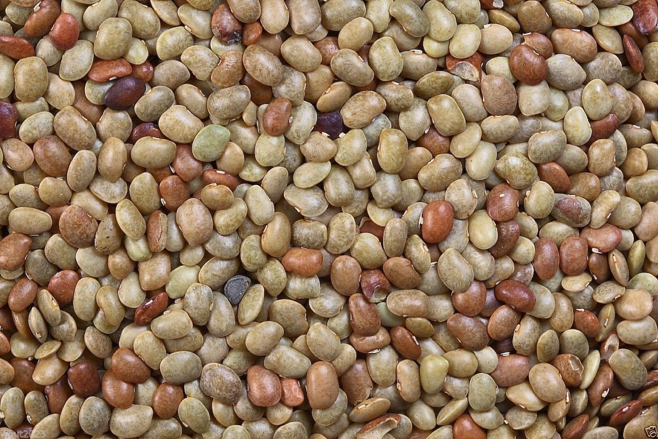 500 Horse Gram Bean Seed,(Indian Kulthi) Macrotyloma Uniflorum- Organic,Utreated SMR