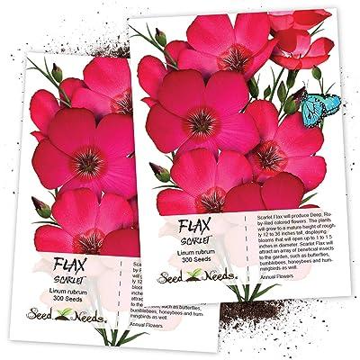Seed Needs, Scarlet Flax (Linum rubrum) Twin Pack of 300 Seeds Each : Linum Plants : Garden & Outdoor