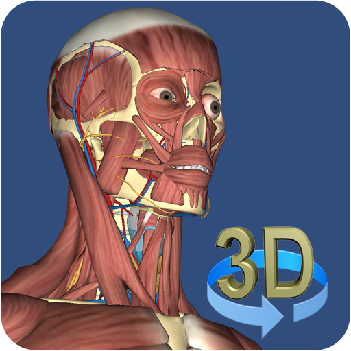 3D Anatomy (Human Anatomy And Physiology Respiratory System Quiz)
