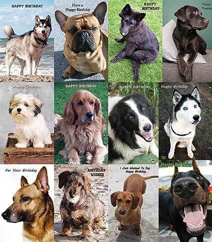 Amazon Assorted Birthday Dog Greeting Cards Bulk 12 Pack