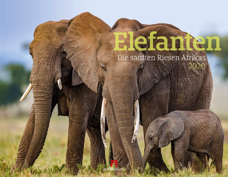 Elefanten   Die Sanften Riesen Afrikas 2020 Wandkalender Im Querformat  54x42 Cm    Tierkalender Mit Monatskalendarium