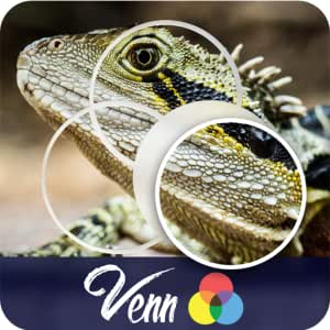 Venn Lizards: Overlapping Jigsaw Puzzles