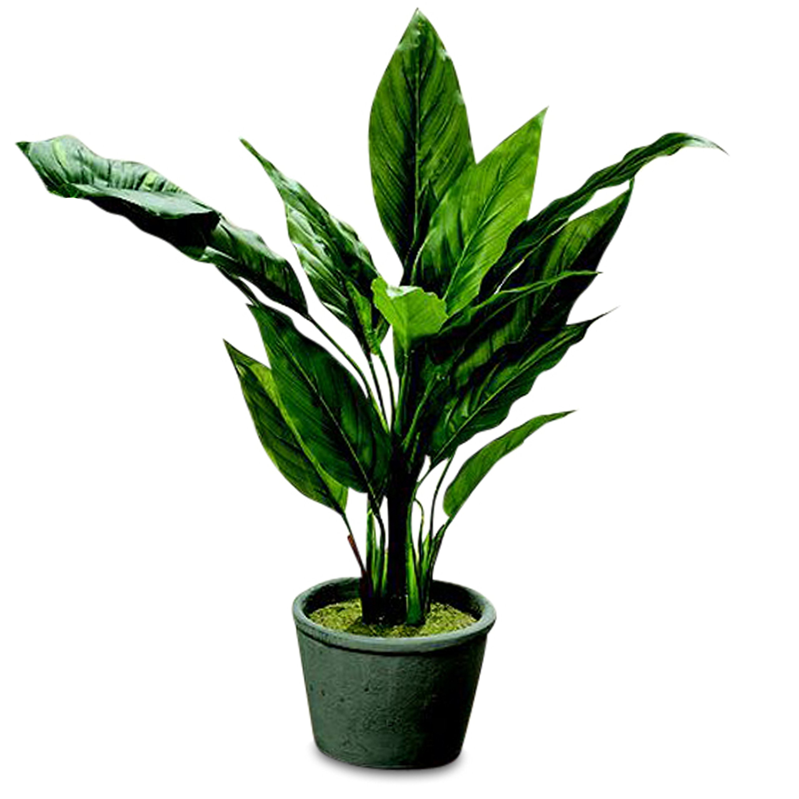 The Realistic Tropical House Plant in a Pot, True to Life Spathiphyllum, Stems and Leaves, Green Growers Pot, Faux Silk, Dirt Covered With Moss, Over 1 Ft Tall (13 3/4 Inches)