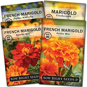 Sow Right Seeds - Marigold Seed Collection for Planting, Crackerjack, Sparky, Dainty Marietta, and Petite Mix Marigolds to Plant in Your Flower Garden; Non-GMO Heirloom Seeds; Wonderful Gardening Gift