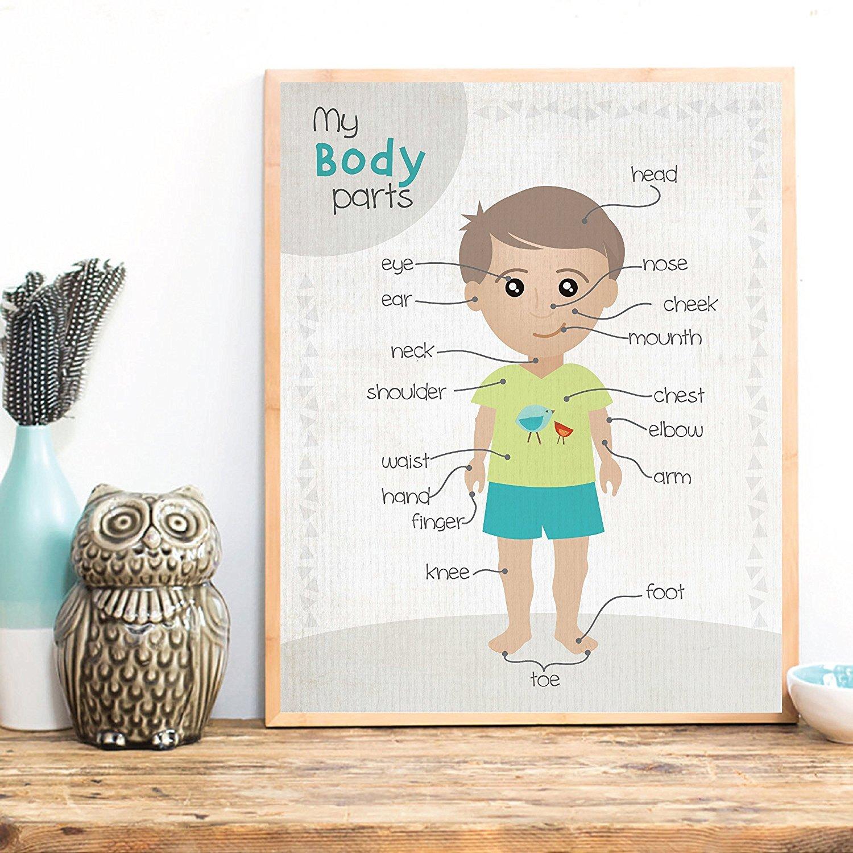 Kids Room Decor Kids Wall Art 24x36 Inch Print Body Parts