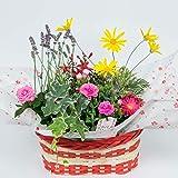 季節のおまかせ寄せ鉢 鉢花 お任せ種類でバスケットに鉢花が綺麗に寄せ植えされているのでそのまま飾るだけ♪ (Mサイズ, 3~5種類をおまかせで寄せ鉢)