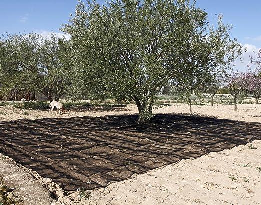 Catral 52010063 - Malla antipajaros extruida 2 x 5 m. verde: Amazon.es: Jardín