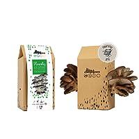 Kit Champignons - Prêt à Cultiver - Pleurotes Gris