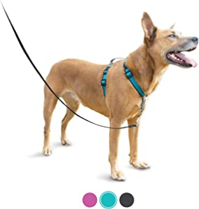 PetSafe 3 in 1 Harness - No-Pull Dog Harness - for X-Small, Small, Medium and Large Breeds - from the Makers of the Easy Walk Harness