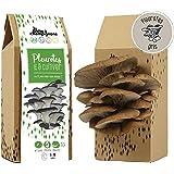 Kit Champignons - Prêt à Cultiver - Pleurotes Gris - Small