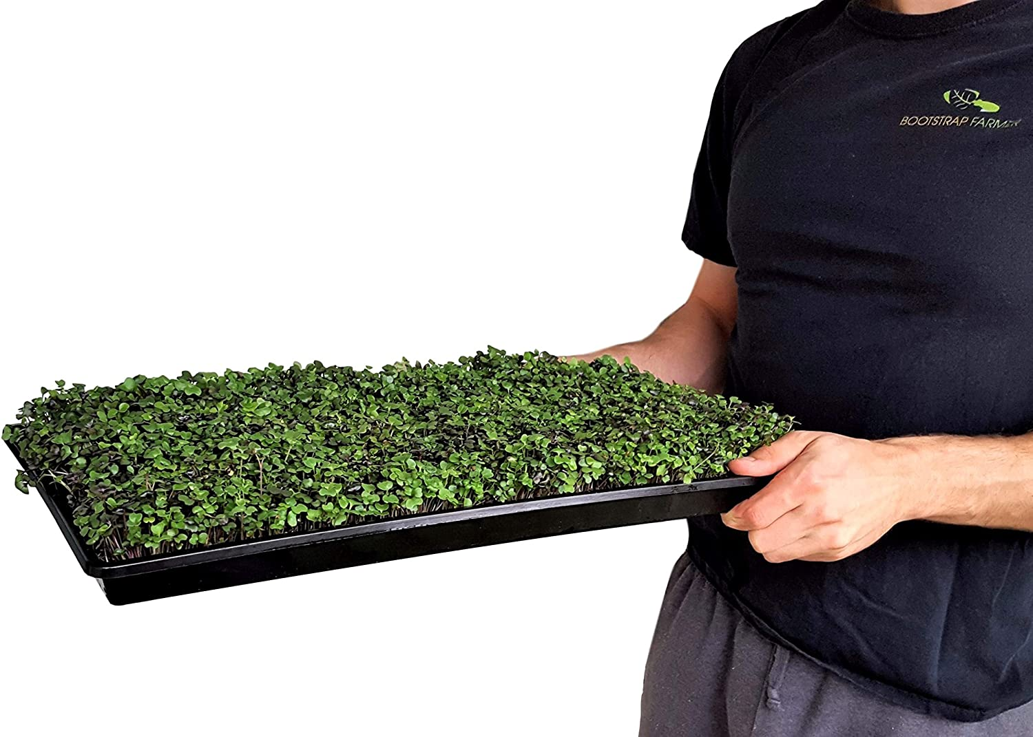 Microgreen Trays No Holes, 60 Pack, Extra Strength Black Shallow 1020 Tray Grow Microgreens Wheatgrass Fodder Sprouting Plants