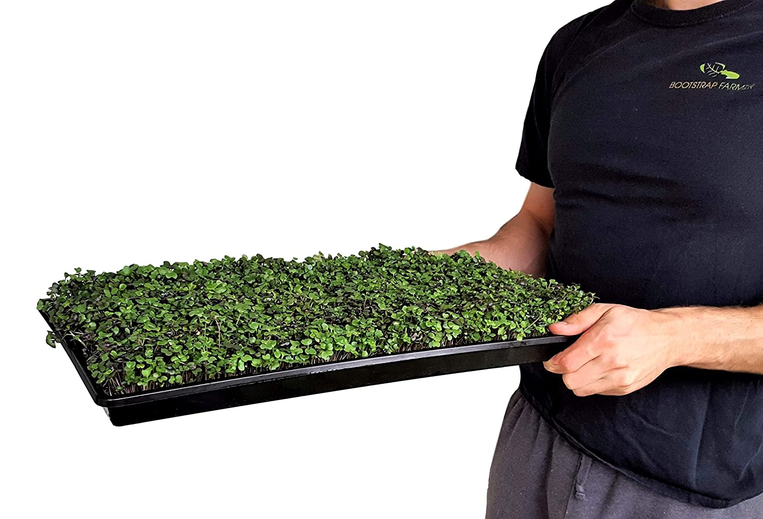 Microgreen Trays No Holes, 5 Pack, Extra Strength Black Shallow 1020 Tray Grow Microgreens Wheatgrass Fodder Sprouting Plants