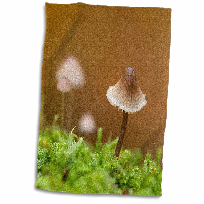 3D Rose Canada-Vancouver. Close Up of Small Mycena Mushroom Hand Towel 15' x 22'
