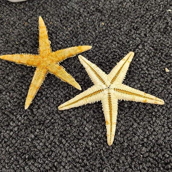 58 foe Navy Blue with White Star Fish Beach theme 3 yards Fold over elastic
