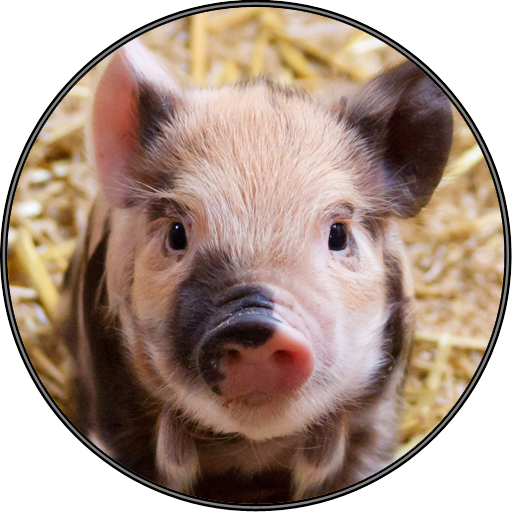 Amazon.com: Cute Funny Pig Piglet Sounds: Appstore for Android