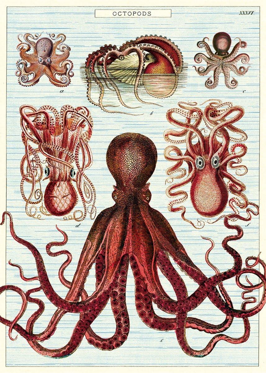 Cavallini Octopods Papier cadeau