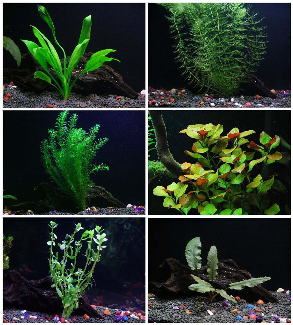 25+ stems / 6 species Live Aquarium Plants Package - Anacharis, Amazon and more! by Aquarium Plants Discounts