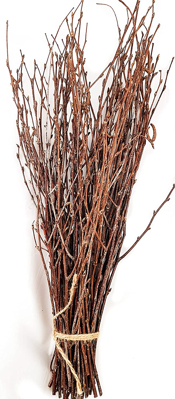 50 pcs Birch Twigs