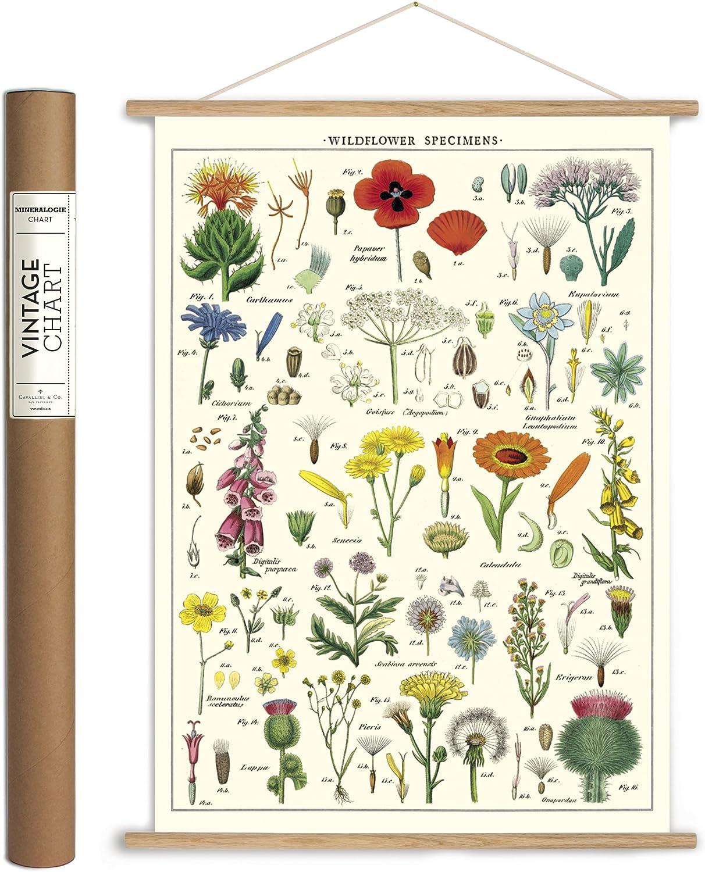 Inc Cavallini Papers /& Co. VPK//SUC Vintage Succulents Vintage Wall D/écor