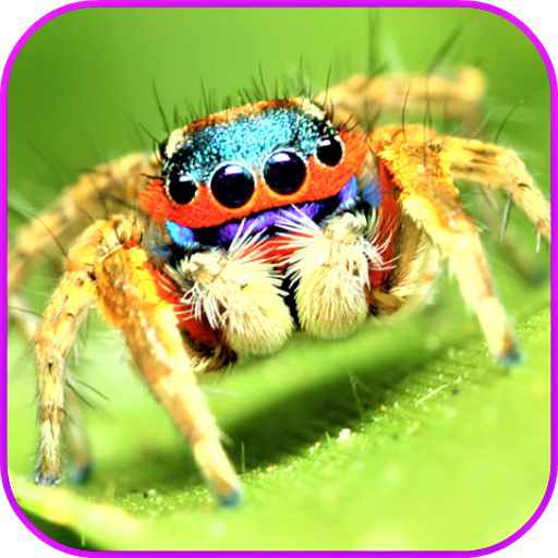 Spiders Wallpaper (Creepy Crawly Spider)