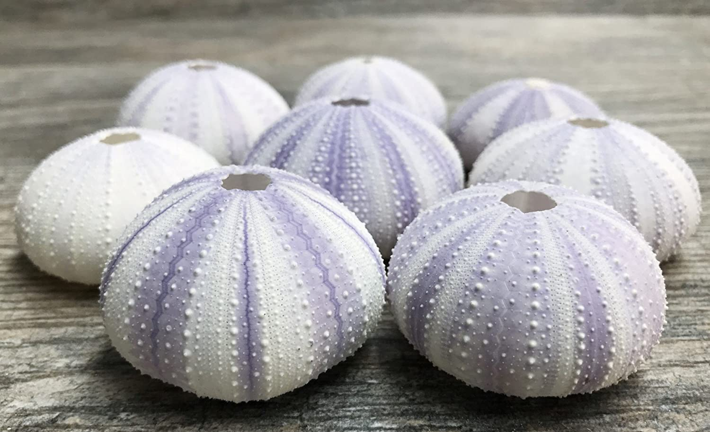 5 Purple Sea Urchin Shell Plus Free Nautical eBook by Joseph Rains 5 Purple Sea Urchin Shells for Craft and Decor Sea Urchin