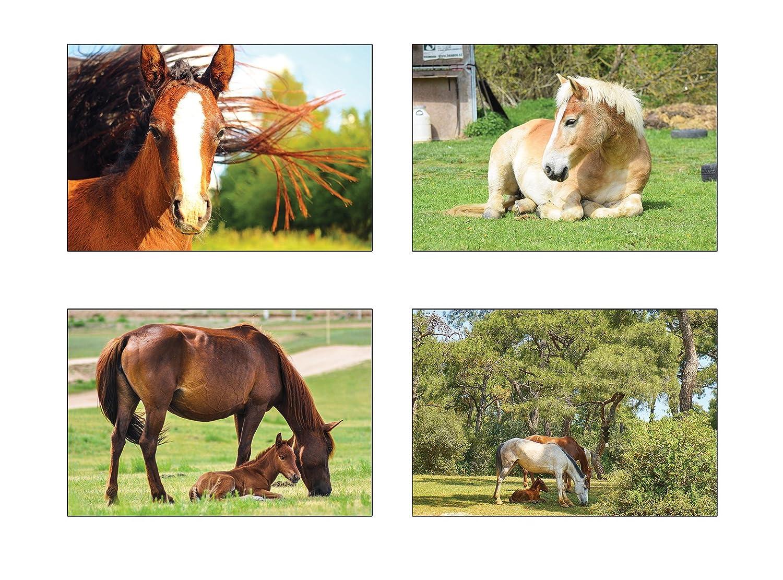 postkarten Cavalli Cartoline/ /20/diversi Cavalli di cartoline di set ideale per collezionisti e post Crossing