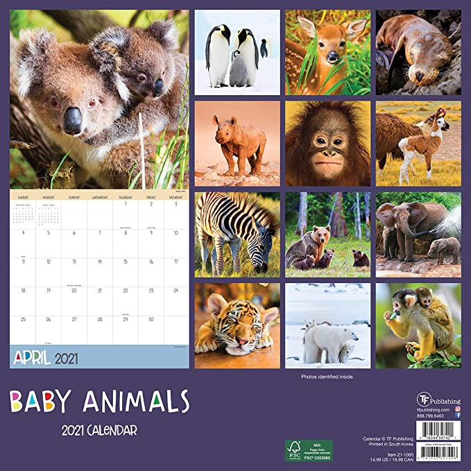 Mica 2021 Calendar Amazon.: TF PUBLISHING 2021 Baby Animals Monthly Wall Calendar