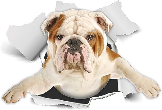 Winston & Bear Perro 3D pegatinas - Pack 2 - British Bulldog ...