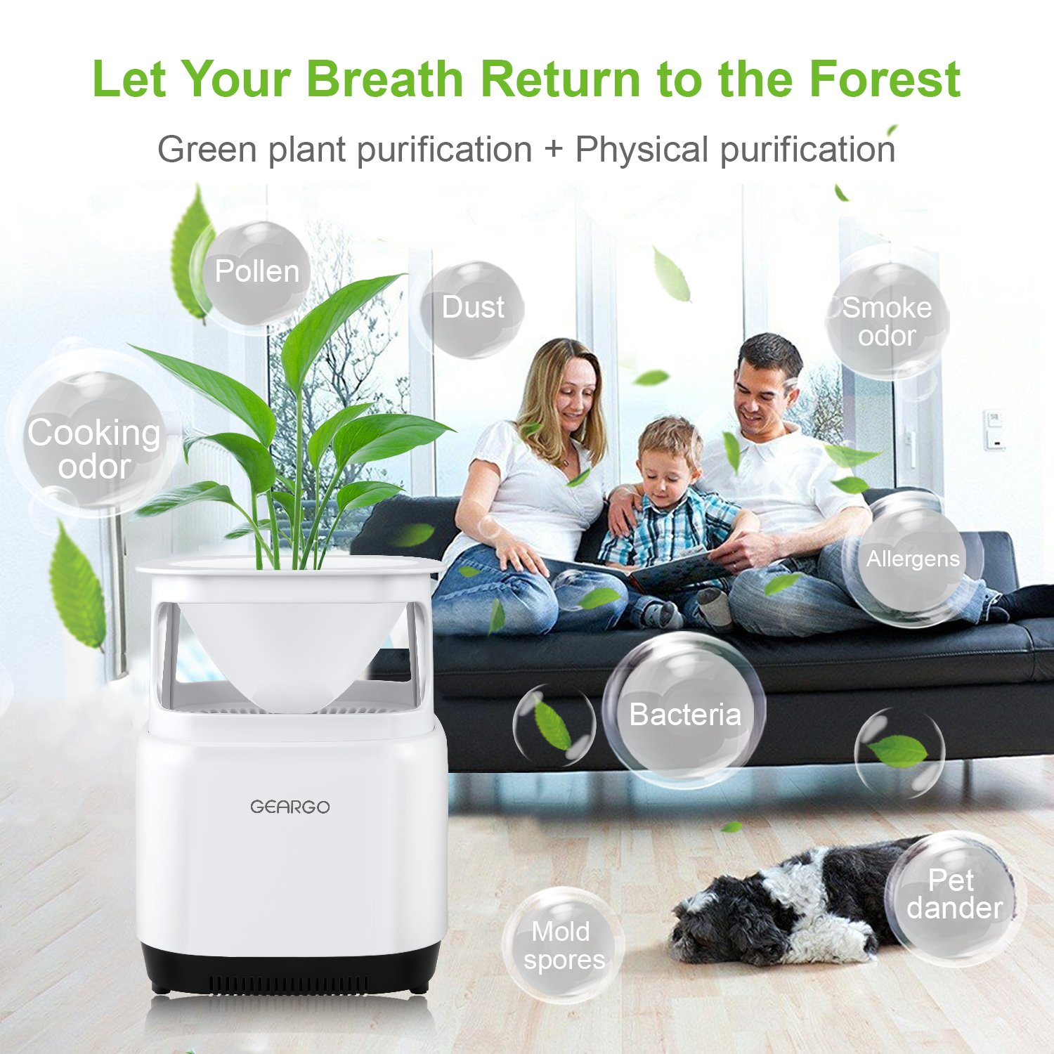 ... Design Air Cleaner with Plant and Physical Purification, for Dust, Pollen, Odors, Smoke, Allergies, Bacteria, Mold, Pets Dander: Amazon.es: Hogar