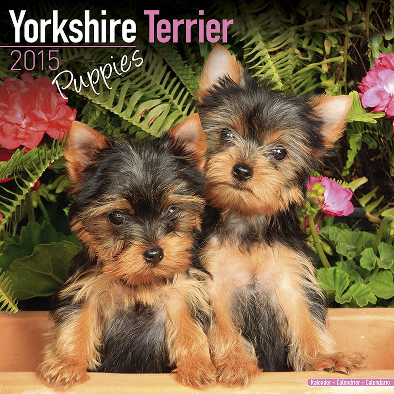 Yorkshire Terrier Puppies Calendar - Only Dog Breed Yorkshire Terrier Puppies Calendar - 2015 Wall calendars - Dog Calendars - Monthly Wall Calendar by Avonside ebook