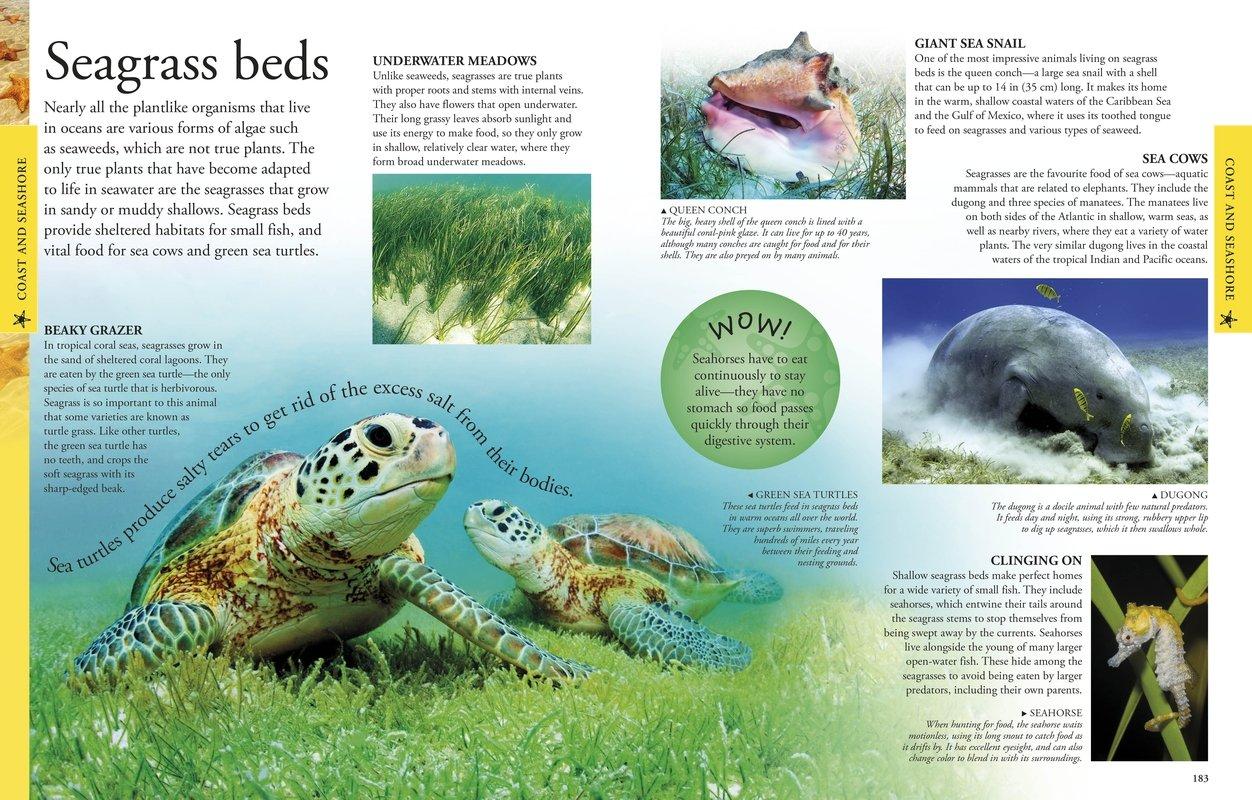 Seagrass beds animals - Seagrass Beds Animals 52