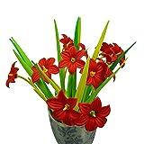 BUOP 24-Count [12+12] Bouquet of Red Hemerocallis