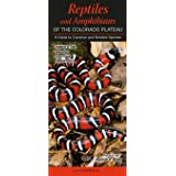 Reptiles & Amphibians of the Colorado Plateau