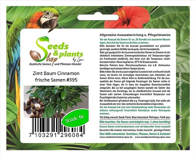 6 canela planta Elettaria cardamomum planta semillas jardín árbol ...