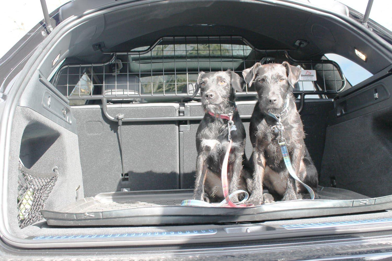 Guardsman Hundegitter FÜr Mercedes Glc 2016 Bis Jetzt Hohe Qualität Maßgeschneiderte Trenngitter Artikelnummer G1415 Haustier