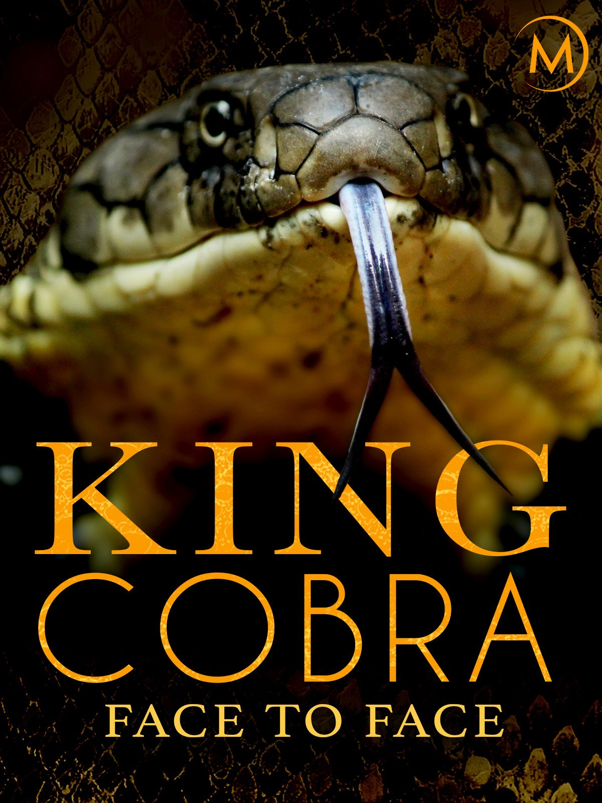 Amazoncom Watch King Cobra Face To Face Prime Video