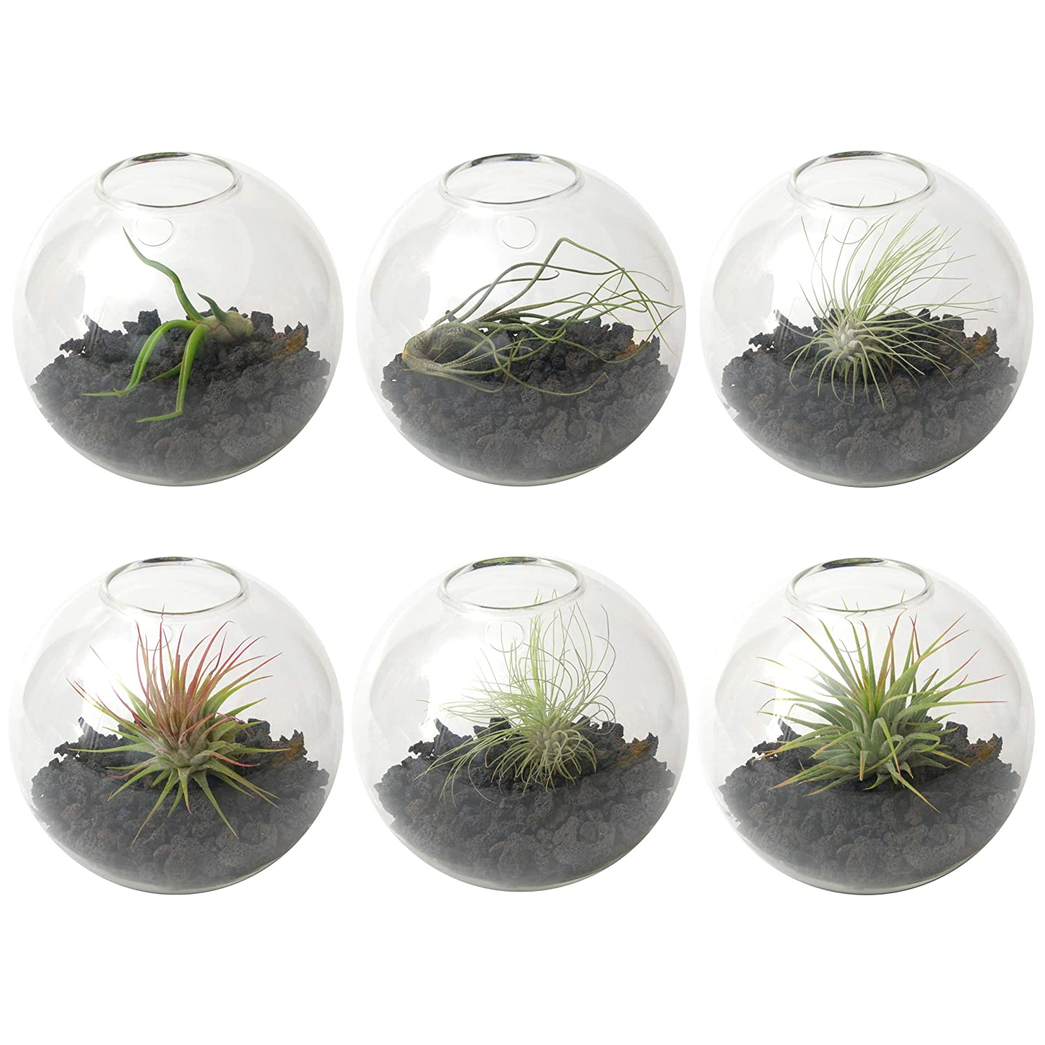 Wall Planter 6-Pack – Terrarium Kit for Hanging Plants Succulents – use as Vertical Garden for Aesthetic Room Decor Outdoor Wall Decor