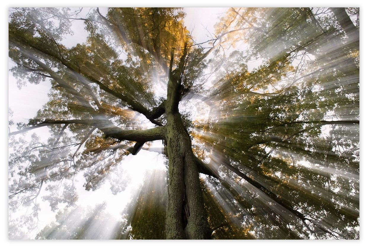 Picture Sensations Glow in The Dark Canvas Wall Art, Sun Tree Rays of Light by Picture Sensations