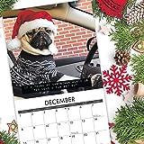 Doug the Pug 2019 Wall Calendar