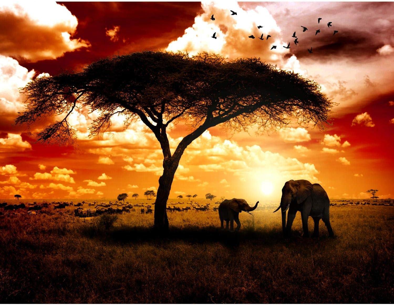 100/% MADE IN GERMANY Fototapete Afrika Elefanten 396 x 280 cm Vlies Wand Tapete Wohnzimmer Schlafzimmer B/üro Flur Dekoration Wandbilder XXL Moderne Wanddeko Runa Tapeten 9110012a