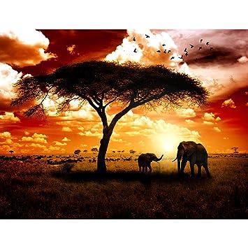 Fototapeten Afrika Elefanten 352 x 250 cm Vlies Wand Tapete ...