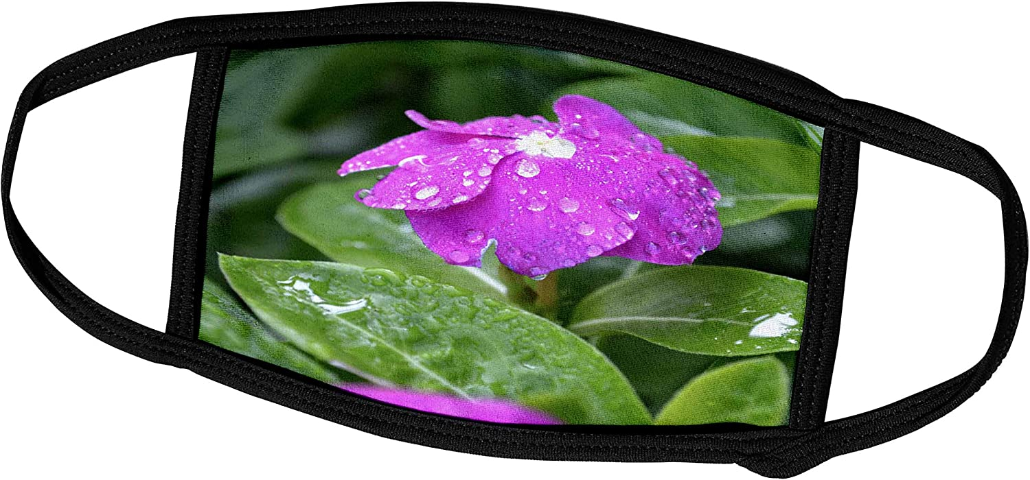 3dRose A Garden Phlox Flower Heavy with Water Drops - Face Covers (fc_77088_2)